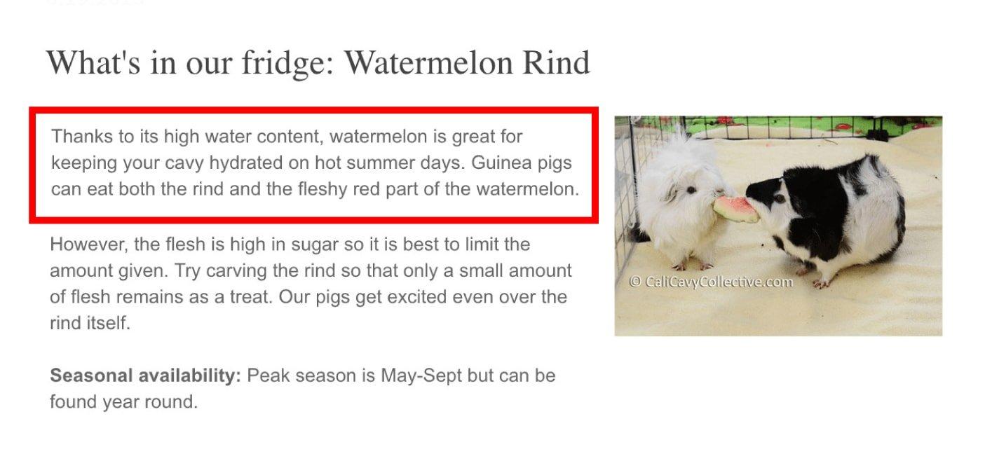 19-guinea pigs 1